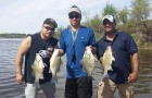 Annual white bass run in full swing