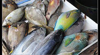 Paradise eats along the Pacific