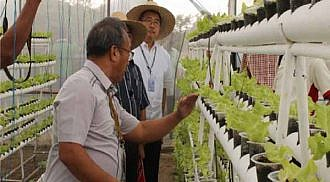 DOST bats for hydroponics technology