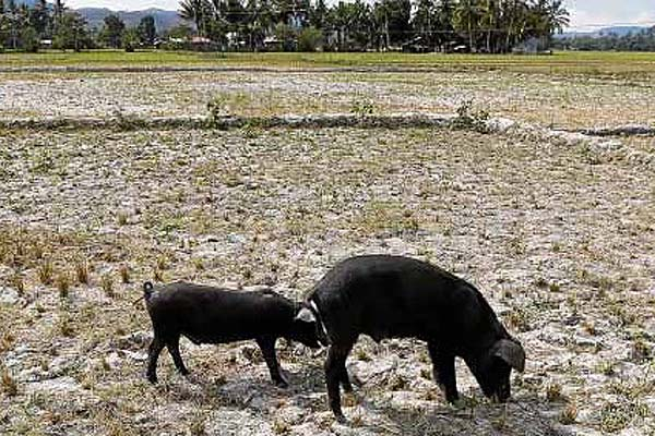 Farmers want water pumps