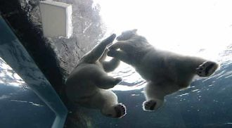Polar Bear Day at Assiniboine Park Zoo