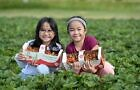 U-Pick Berry experience at different Manitoba farms